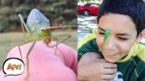 Funny Bug Pranks from October 2018 | Try Not to Squirm Challenge