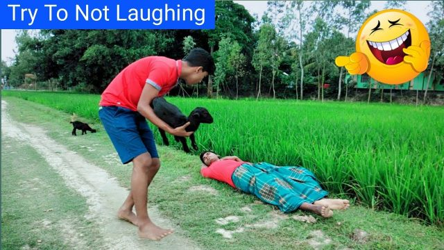 Must Watch Very Funny Videos 2018 |Try Not To Laugh | Top Funny Videos | Hapta Fun | EP 10