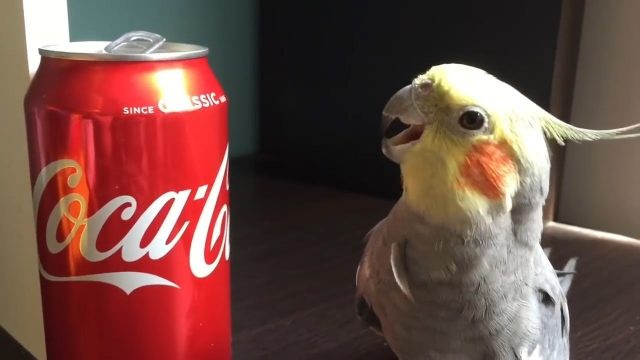 Try Not To Laugh Or Smile Watching Funniest Parrots 2018