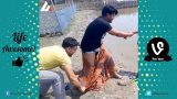 Try Not To Laugh Funny Pranks Gone Wrong Best Pranks 2018
